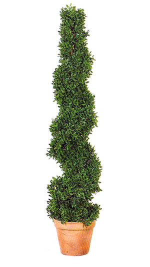 Mini Boxwood Spiral Topiary 36in