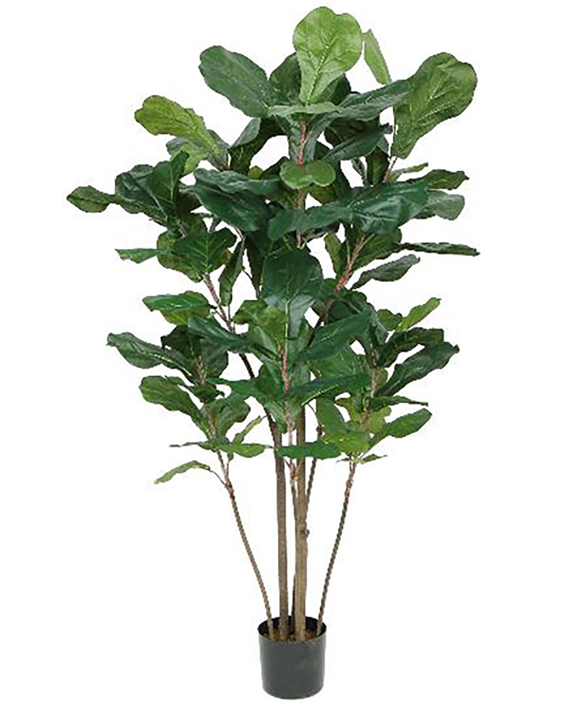 Fiddle Leaf Fig Tree 4ft