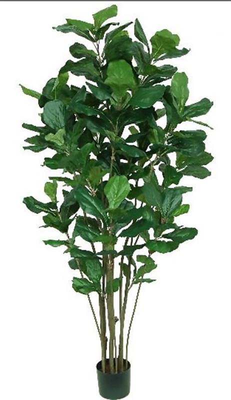 Fiddle Leaf Fig Tree 6ft