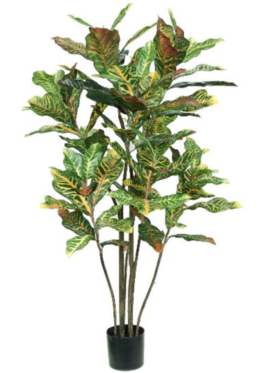 Croton Tree 4ft