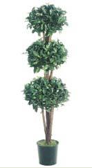 5' Ficus Topiary