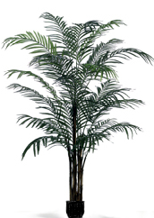 ROYAL ARECA PALM - 8 FT.