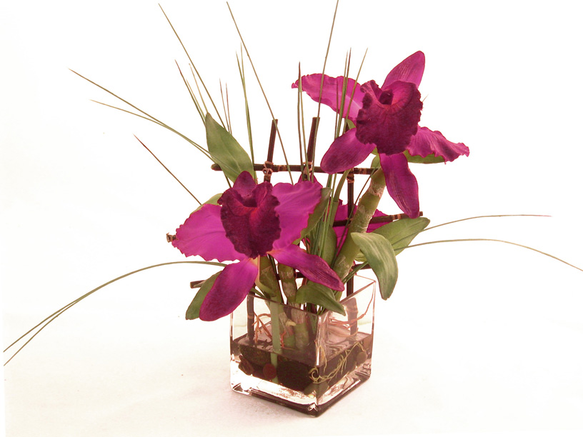 Cattleya Orchid With Bamboo