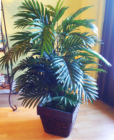 Double Areca Palm in Basket
