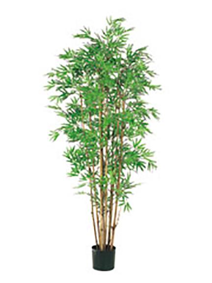 Japanese Bamboo 5ft
