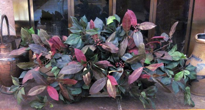 Laurel and Fruiting Ivy Garden