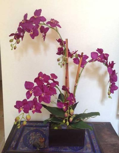 Phalaenopsis Orchid Purple x3
