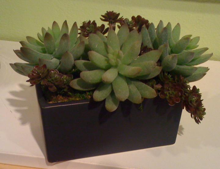 Succulent Mix Small