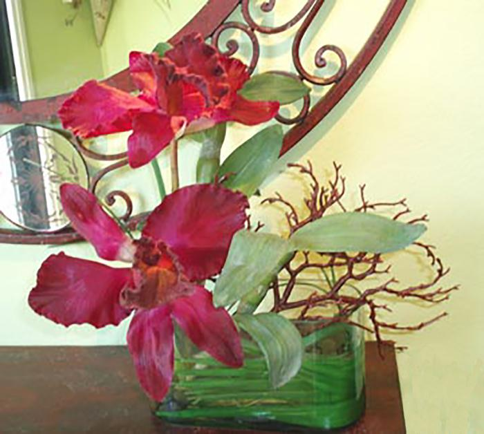 Cattleya Orchids in Oval