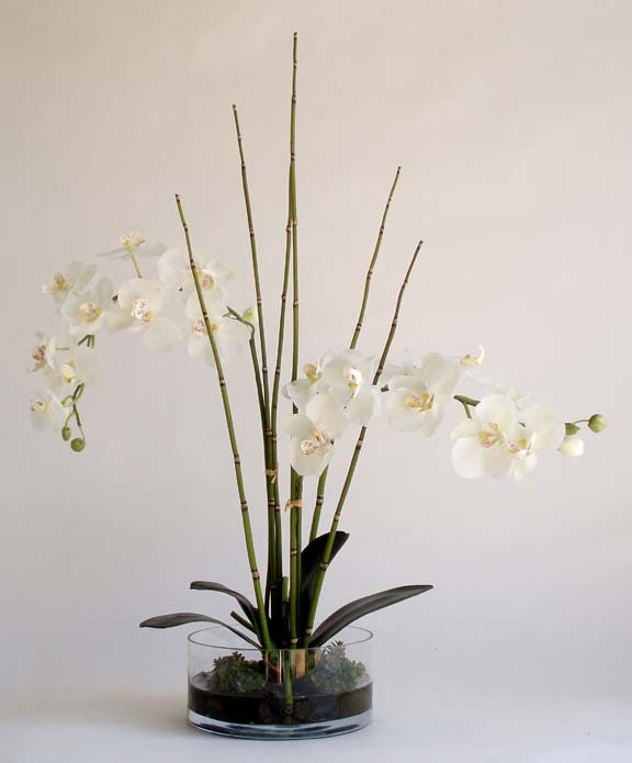 White Phalaenopsis In Round Glass