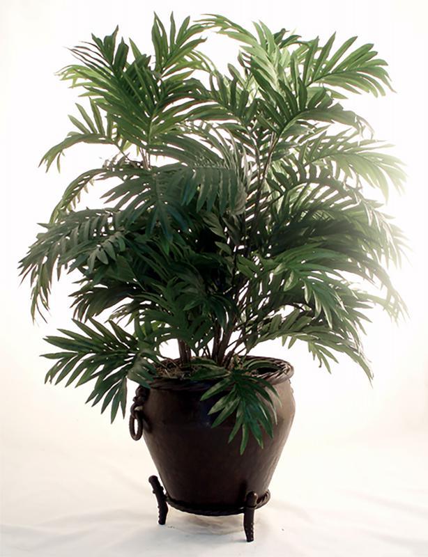 Palm Bush Triple