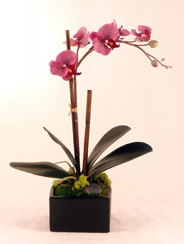 Purple Phalenopsis Orchid