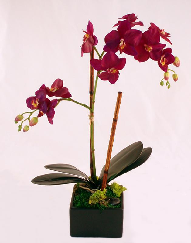 Purple Phalaenopsis Orchid In Square