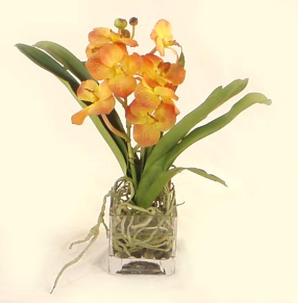 Gold Vanda Orchid