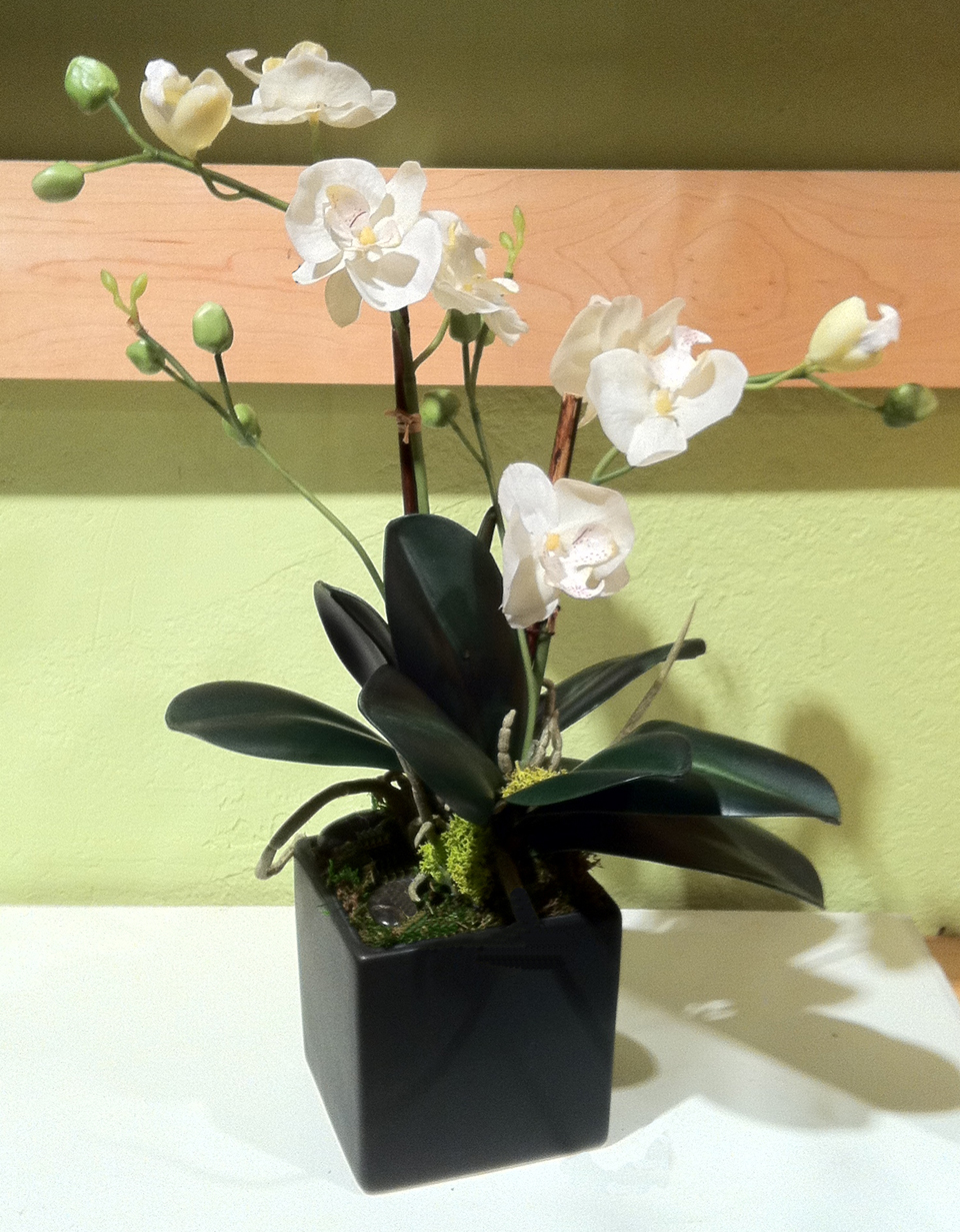 Mini White Phalaenopsis In Black Square