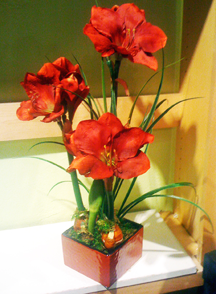 Amaryllis Red X3