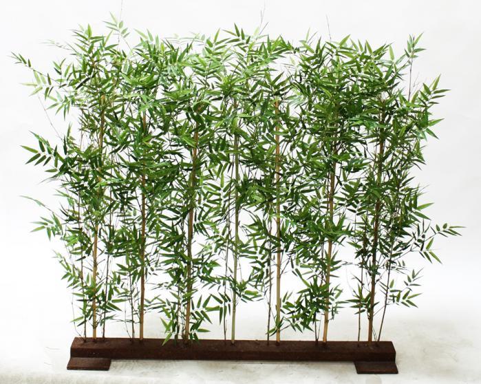 Bamboo Hedge 4'