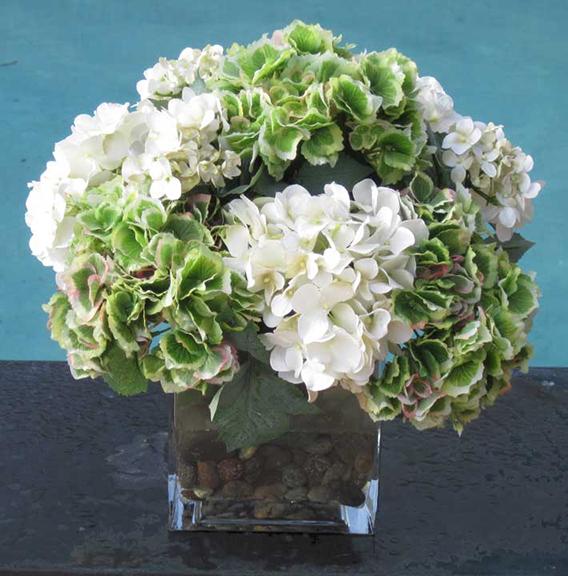 Hydrangea Cream Green