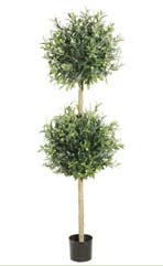 5.5' Olive Topiary