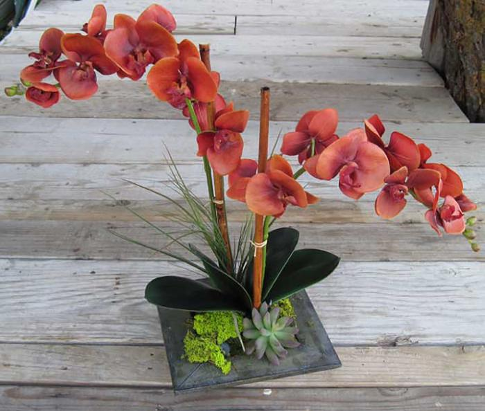 Phalaenopsis Orchid Flame Red