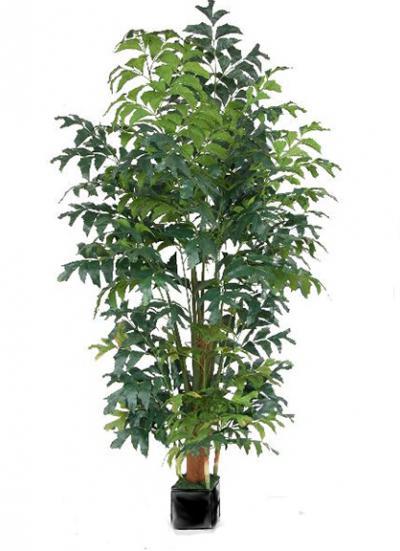 Fishtail Palm - 7 Ft.