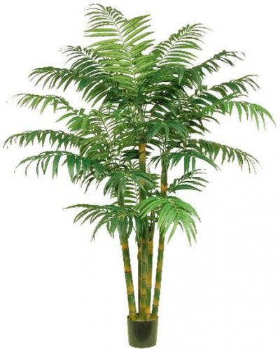 Areca Palm - 7 Ft