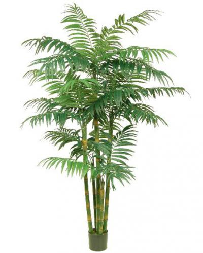 Areca Palm - 8 ft.