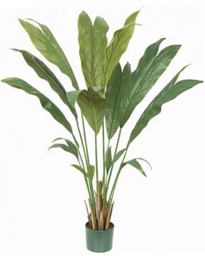 Chamaedorea Palm - 4 Ft
