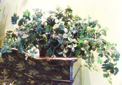 Danica Grape & Fittonia Ivy