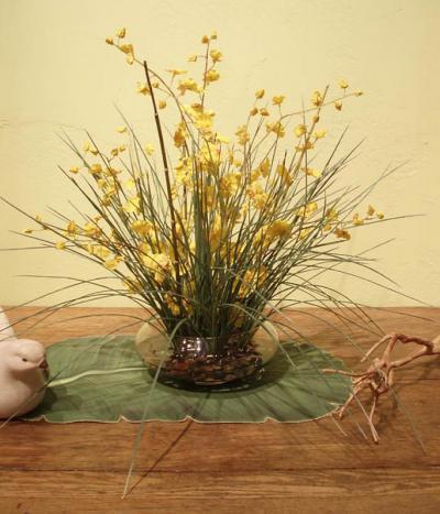 Wild Oncidium Orchids