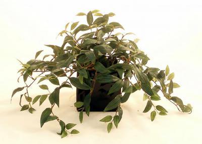 Ruscus Ivy Planter