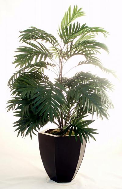 Palm Bush Double
