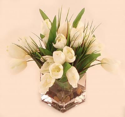 Rainbow Tulips In White