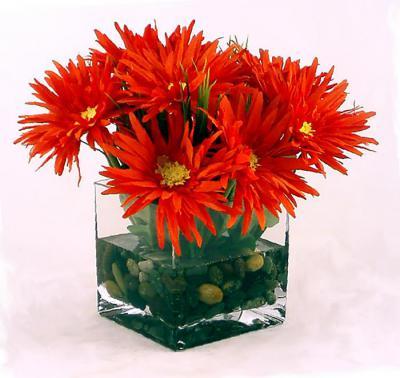 Gerber Daisy Orange Sq