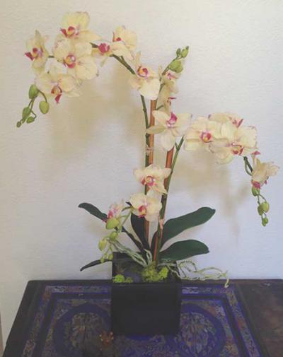 Yellow Phalaenopsis X2