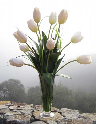 Large French Tulip In Cream