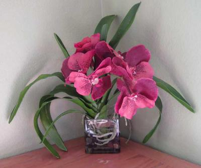 Vanda Orchid Rust