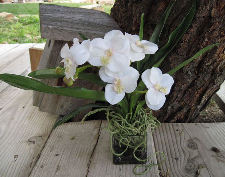 Vanda Orchid White