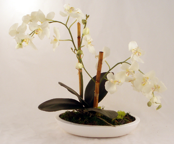 White Phalaenopsis In White Oval